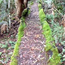 Log-Moss-Path-L-300