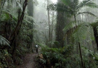 rainforest-trail