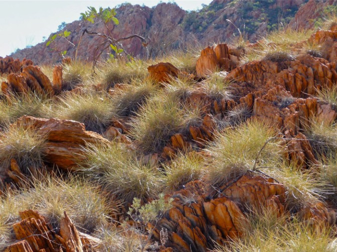 Rocks-&-Spinifex
