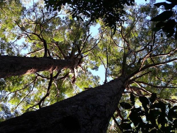 tree-canopy