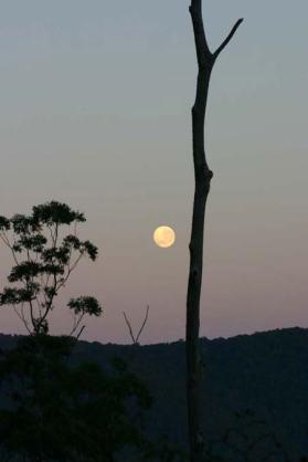 Tree-moon