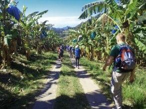 Banana-walk-400