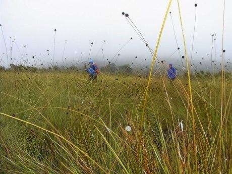 grass-walk