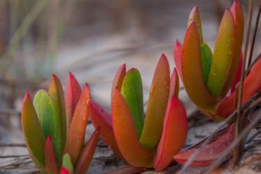 Succulents-S-250